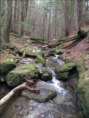 Woodland stream along the Westfield River